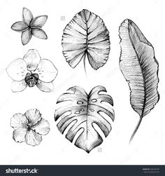 stock-photo-hand-drawn-tropical-flowers-and-plants-pencil-drawing-258160187.jpg (1500×1600)