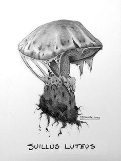 Extrait du carnet d'esqisses: Suillus Luteus. From my sketchbook: Suillus Luteus.   #Sketchbook #Journal #dessin #croquis #sketch #esquisses #Suillus #Champignons #Mushroom