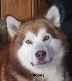 Woody, (d)