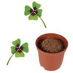 Potěšte svou maminku a darujte jí domů pěstitelský dárek, Vypěstuj si čtyřlístek. V této sadě najdete mini květináč, sáček se semínky čtyřlístku, výživnou tabletu a návod na pěstování. Planter Pots