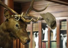 Hunter: Theodore Roosevelt's Rough Rider hat hangs on the horns of an elk head shot by the nation's 26th president in his trophy room at Sagamore Hill