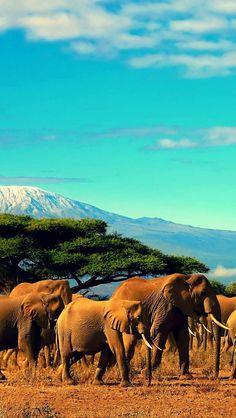 Des vacances relax ! I #Tanzanie I