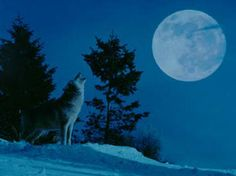 The Full Wolf Moon - Full moon names date back to Native American tribes who lived in northern and eastern United States. Those tribes kept track of the seasons by giving distinctive names to each recurring full moon.  Indians named the first moon of the year the Full Wolf Moon because of the wolf packs that howled hungrily outside their villages in the heart of winter. It is also called the Old Moon or the Moon after Yule.