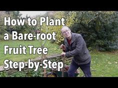 Bare-root trees are much less expensive than pot-grown plants and are available between autumn and spring, while the plants are dormant. Handily, this is als. Shade Perennials, Shade Plants, Fruit Trees, Trees To Plant, Permaculture Principles, Overwintering, Garden Planner, Spring Plants, Beneficial Insects