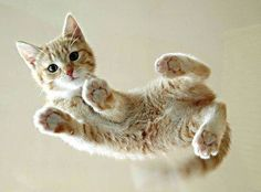Cute Adorable Cat Photo Gallery theBERRY