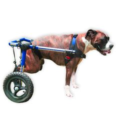 dog wheelchairs for handicapped pets