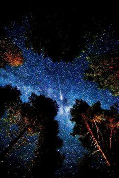 숲속의 별