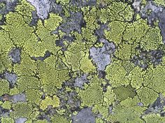 Lav Lichen City Photo, Texture, Surface Finish, Patterns