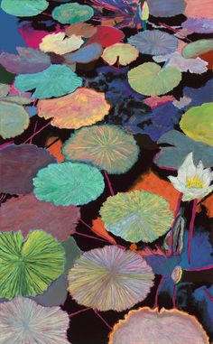 Water lily file Ina's Magic by Allan P Friedlander