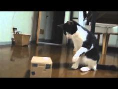 Funny Cats Compilation - 5 min - Happy New Year 2015 - http://dailyfunnypets.com/videos/dogs/funny-cats-compilation-5-min-happy-new-year-2015/ -  - animals, best, cats, compilation, dog, ever, friend, fun, funny, gatos, happening, moments, new, pets, wtf, year