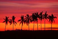 Palm Trees & Sunset, Queens Road, Fiji mural
