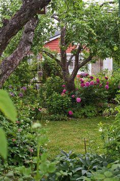 Siirtolapuutarhassa kaikki kukat saavat kukkia | Viherpiha