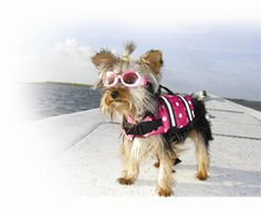 Paws Aboard! Dog Life Jackets, Boat Ladders, Water Toys and Accessories.