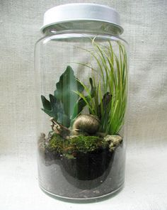 Snail Terrarium (with air holes)