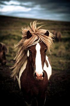 a horse #brown