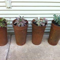 Succulents in tin pots Tin, Planter Pots, Succulents, Garden, Garten, Pewter, Lawn And Garden, Succulent Plants, Gardens