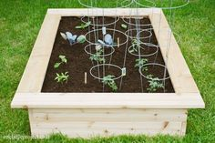 How To Start A Vegetable Garden, Top Ten Tips