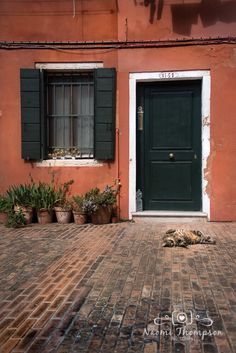 Don't forget to photograph the wildlife in Venice! Cats of Italy!