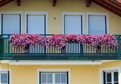 Üppige Blütenlandschaft mit herrlichem Ausblick