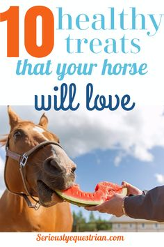 8 Healthy Horse Treats that your horse will love - Seriously Equestrian Horse Barns, My Horse, Horse Love, Horse Stalls, Horse Feed, Horse Camp, Crazy Horse, Pretty Horses, Beautiful Horses