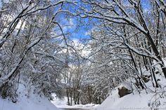 Nevica!  La strada di casa in bianco... Erbaviola.com - Grazia Cacciola - http://www.erbaviola.com/2014/01/24/i-cambi-di-programma-dallorto-al-divano-davanti-al-fuoco.htm
