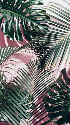 Cute Wallpapers Discover Green tropical leaves on a pink wall Hipster Vintage, Style Hipster, Hipster Ideas, Plant Wallpaper, Flower Wallpaper, Leaves Wallpaper, Animal Wallpaper, Mobile Wallpaper, Photo Wall Collage