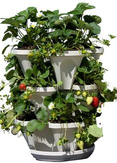 Cheap 3 Tier Stackable Garden – Indoor / Outdoor Vertical Planter Set – Self Watering Tiers From Top Down – Grow Fresh Herbs In The Kitchen or Patio – Smart Planting Pots – Used for Strawberries Herbs Peppers Flowers and Succulents (Stone) Vertical Herb Gardens, Vertical Planter, Herb Garden Planter, Container Gardening Vegetables, Vegetable Gardening, Thing 1, Self Watering, Garden Gifts, Plant Care