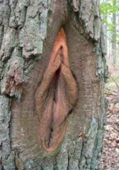 Top 11 des arbres bizarres et assez illustratifs