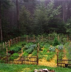 What a gorgeous garden.