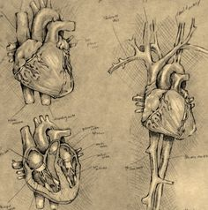 Testing Yourself, Examining The Heart: What Does It Mean To Believe? - by Payte Johnson
