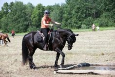 17 Best images about Horse Obstacle Course Natural . Obstacle Course Training, Obstacle Course Races, Horse Training Tips, Race Training, Trail Riding, Horse Riding, Horse Games, Four Legged, Dressage