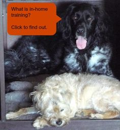 Positive Solutions Dog Training in the Portland OR metro area provides in-home training by appointment.