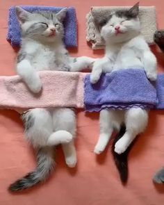 Nickerchen - Marie Current Memes - New Ideas Cute Cats And Kittens, Baby Cats, I Love Cats, Kittens Cutest, Cute Funny Animals, Cute Baby Animals, Funny Cats, Cute Dogs, Cute Animal Videos