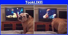 Khaleesi หมาพันธุ์บูลด็อกอายุ 4 ปี กำลังเห่าเตือนเด็กหญิงที่อยู่ในหนัง …  - #คลิปดัง #คลิปฮิต #เรื่องเด่น #เรื่องดัง #วิดีโอคลิป #รูปภาพ #เรื่องราวน่าสนใจ