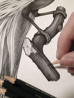 L'oiseau de feu by Violaine & Jeremy, via Behance