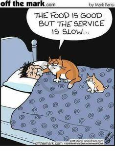 Mystery Fanfare: Cartoon of the Day: Cats Funny Cartoons, Funny Cats, Funny Animals, Cute Animals, Funny Horses, Crazy Cat Lady, Crazy Cats, Cat Jokes, Cat Comics