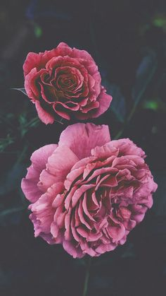 iPhone Wallpaper - 21 Pretty Wallpapers For Your New iPhone Xs Max - Wallpapers Floral Wallpaper Iphone, Rose Wallpaper, Tumblr Wallpaper, Nature Wallpaper, Wallpaper Makeup, Wallpaper Wallpapers, Flower Wallpapers For Iphone, Beautiful Wallpaper For Phone, Floral Wallpapers