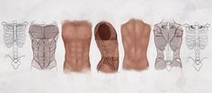 AS Drawing the Male Torso by ConceptCookie.deviantart.com on @deviantART