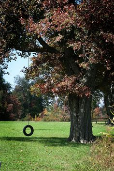 I am having a tire swing in my yard when I have my own house!