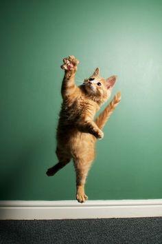 Attack cat.