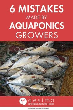 Read this guide before starting your aquaponics system. If you plan your system right, you will be able grow healthy fish and have delicious organic food to eat for your family.   Desima
