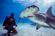 "Great hammerhead and diver Go to http://iBoatCity.com and use code PINTEREST for free shipping on your first order! (Lower 48 USA Only). Sign up for our email newsletter to get your free guide: ""Boat Buyer's Guide for Beginners."""