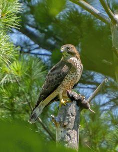 Largest Bird Of Prey, Birds Of Prey, Bird Species, Mole, Bird Feeders, Habitats, Cool Photos, Wildlife, Wings
