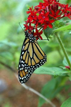 <>< Butterfly