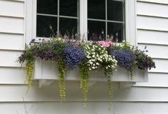 I do love planted window boxes.