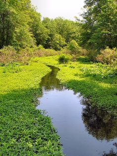 Great Swamp National Wildlife Refuge - New Jersey by Loci Lenar, via Flickr