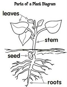 Studying Plants and Having Fun!