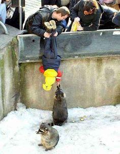Dieser Vater erfüllt einfach seinem Kind den Wunsch, einen Waschbären zu füttern. Das ist wirklich sehr lieb.