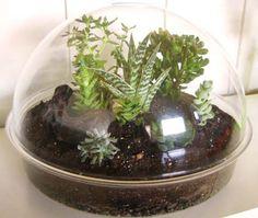 Mini Tropical Terrarium Design Ideas and instructions from interiorfans.com