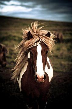 Gorgeous wild horse